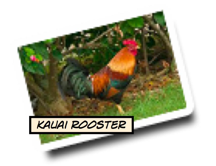 Kauai's Fauna