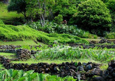 Limahuli Gardens, Haena, Kauai