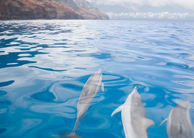 Spinner Dolphins on the NaPali Coast