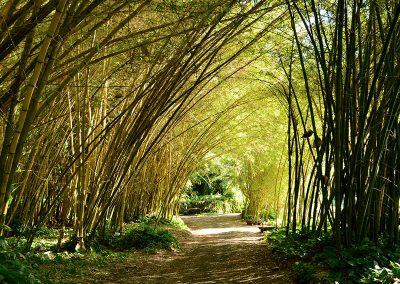 Allerton Botanical Gardens, Poipu, Kauai